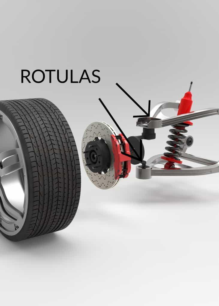 Rotulas superior e inferior